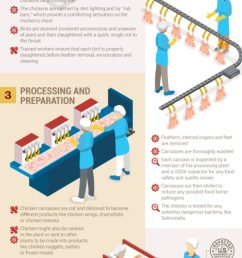 an infographic on the poultry processing line which shows how chickens are slaughtered and processed [ 900 x 2700 Pixel ]