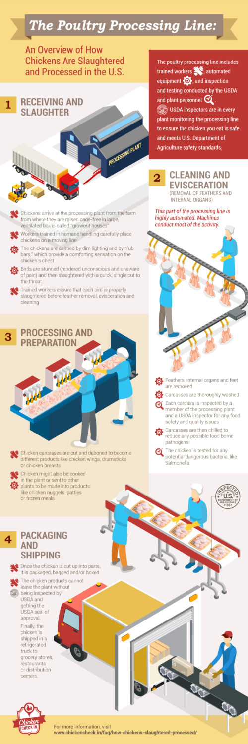 medium resolution of an infographic on the poultry processing line which shows how chickens are slaughtered and processed