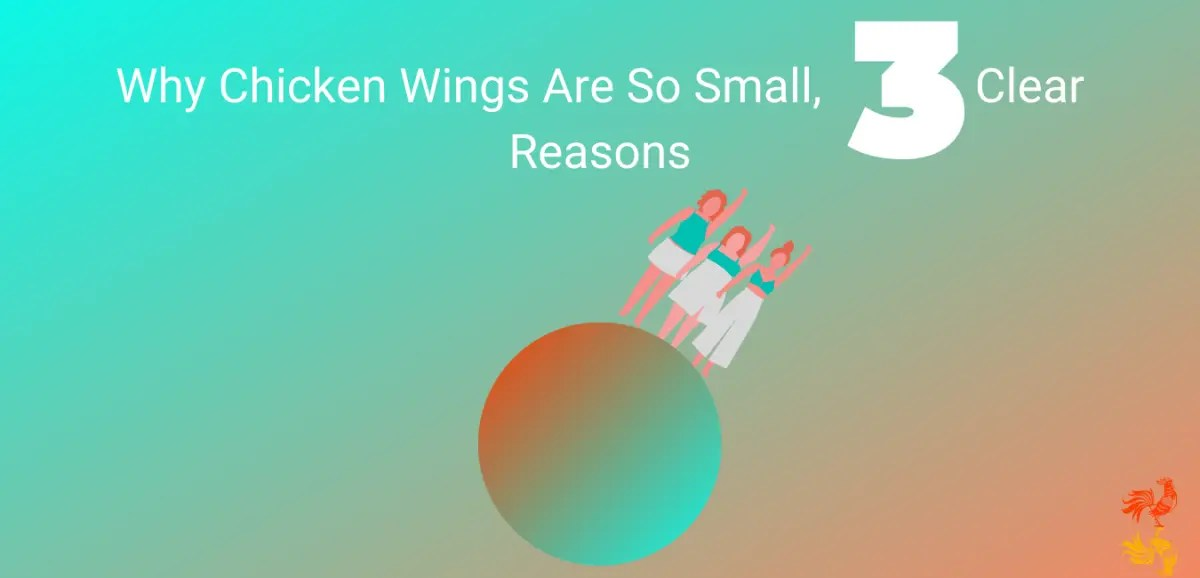 Why Chicken Wings Are So Small, 3 Clear Reasons