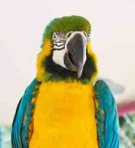 Uncle Sandy's Macaw Bird Park is an amazinga parrot rescue and bird sanctuary in Pensacola, Florida.