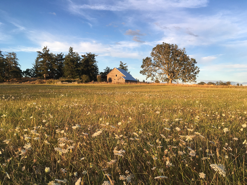 Field of flowers and barn in the Pacific Northwest
