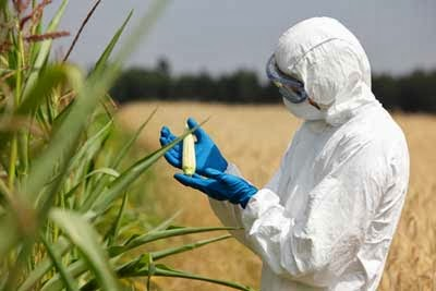 Why African farmers do not want GMOs