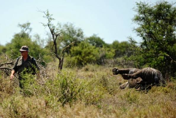 Mozambique charges journalists investigating rhino poaching
