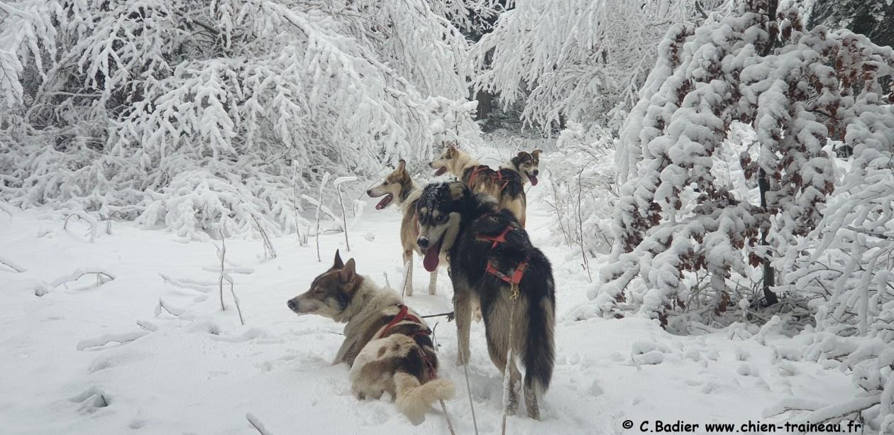 Bon KDO traineau à chiens
