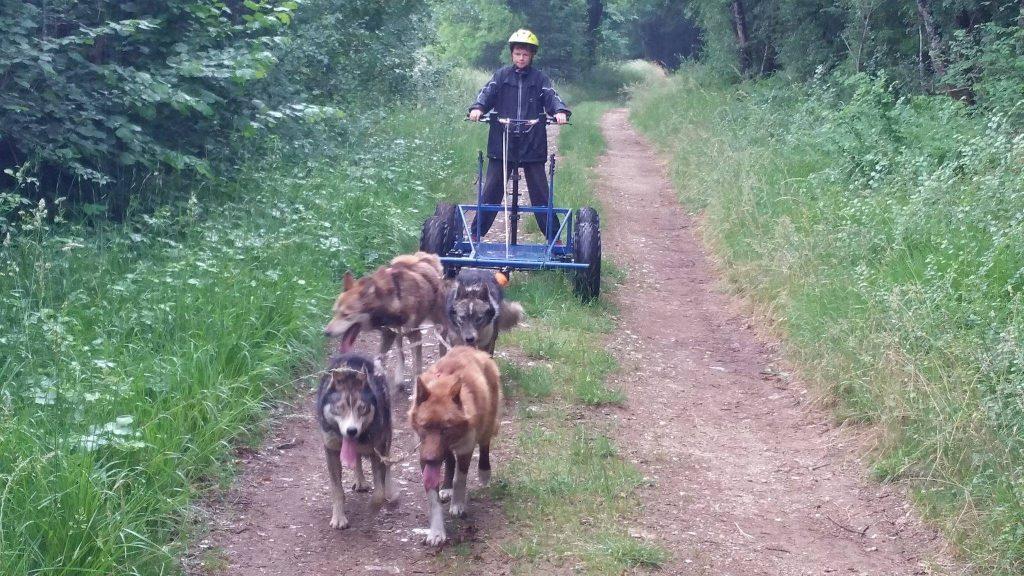 conduite de canikart chien de traineau Mush and Rando