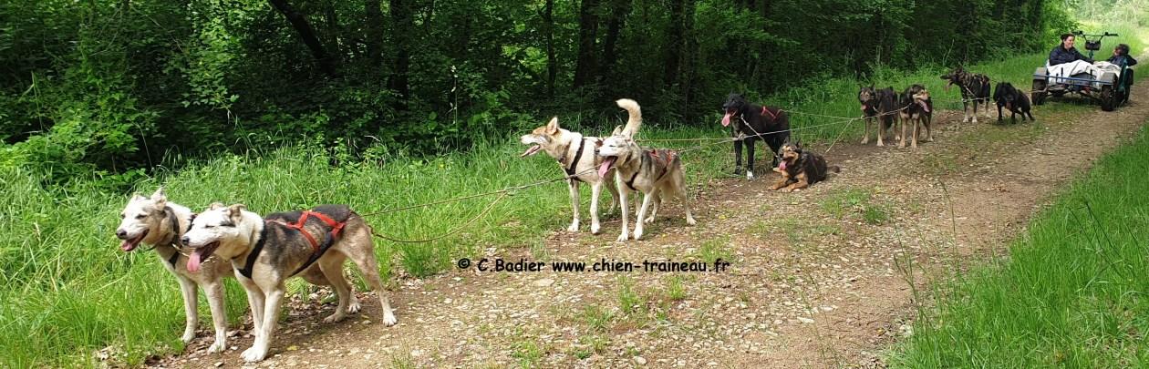 PMA entrainement canikart chien de traineau
