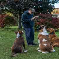 Cours de dressage pour chien a son domicile, Pourquoi et Pour Qui ?