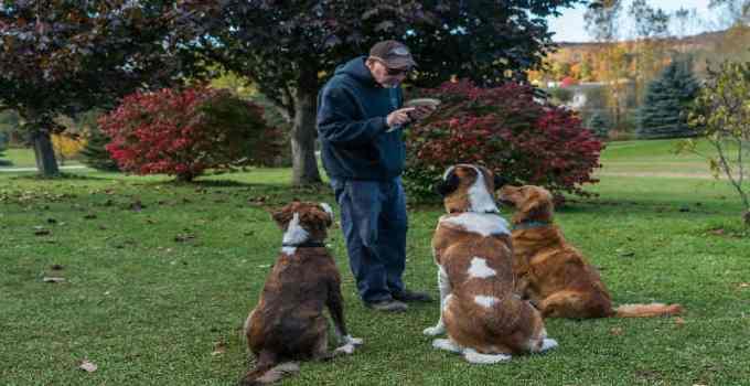 À qui s'adresse le cours de dressage pour chien adulte à son domicile pourquoi est-il important d'éduquer son fidèle compagnon ami canin