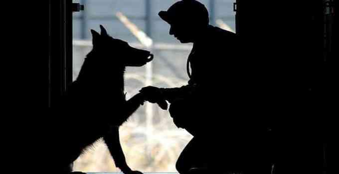 Éducateur canin mode d'emploi et comportementaliste animalier conseil