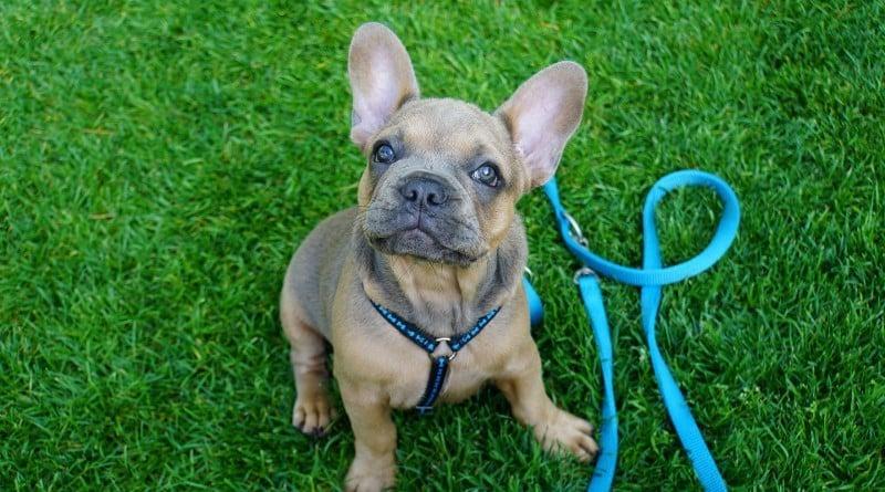 Je dresse mon chien, Je dresse mon chiot en 15 minutes par jour. Il est temps de passer à l'action !