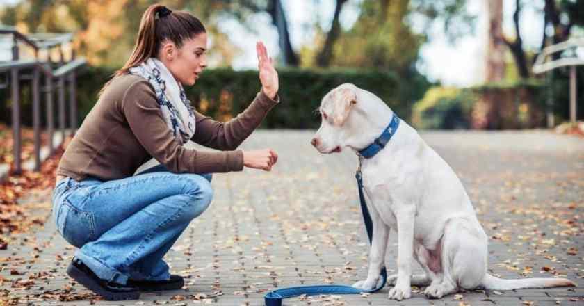 « pas bouger chien ! » Apprenez à votre chien à rester à sa place facilement.
