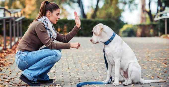 Comment apprendre l'ordre pas bouger chien facilement sans crier