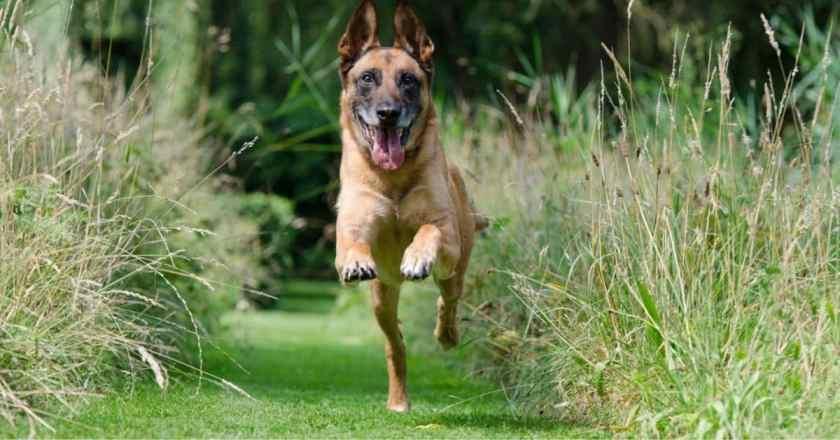 le rappel chien : ordre parfait pour faire revenir son chien facilement