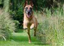 Le rappel chien comment réussir avec des exercices simples en promenade