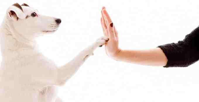 Éduquer son chien facilement les 9 règles de l'apprentissage