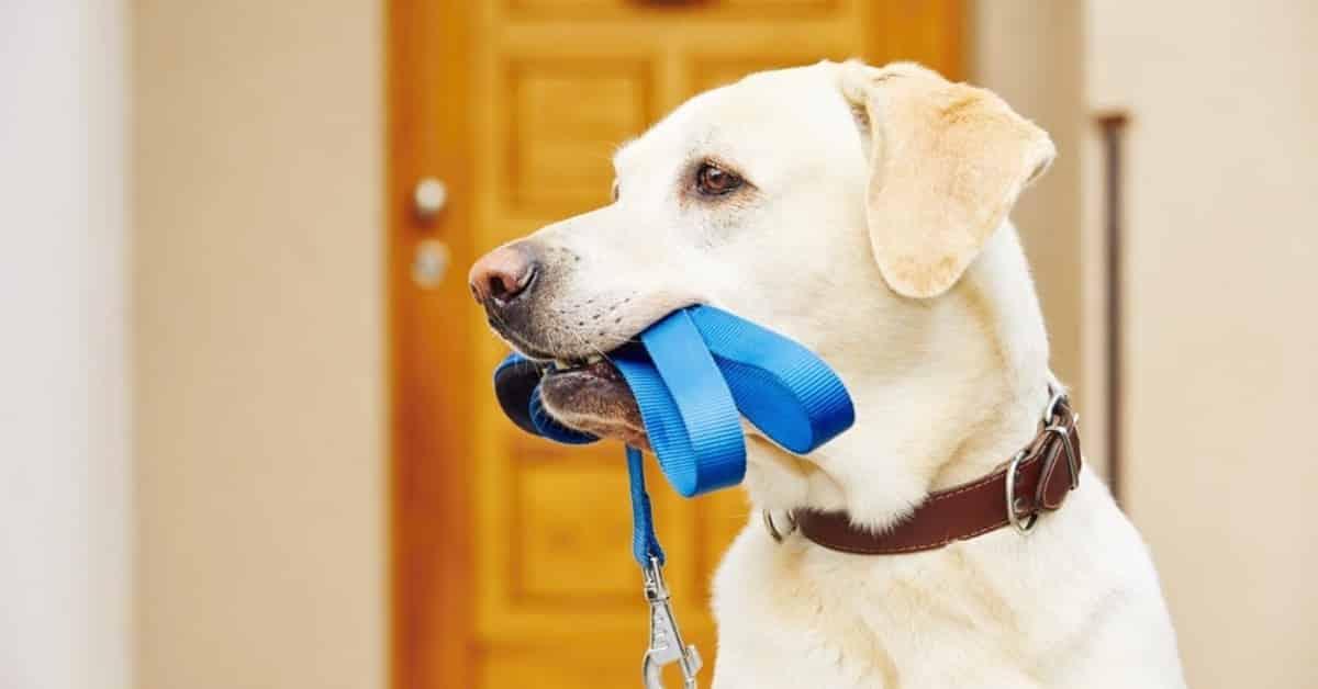 Comment laisser son chien seul Facilement pendant 8 h ? Sans crier