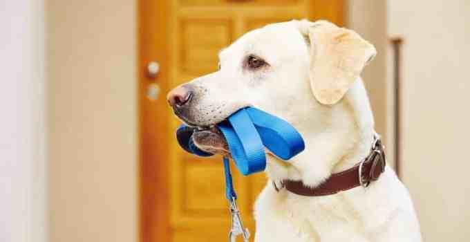 Comment laisser son chien seul pendant huit heures est-ce que c'est une bonne idée