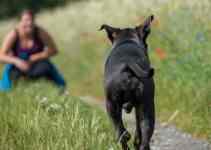 Apprendre le rappel à son chien de très bon conseil vous attend