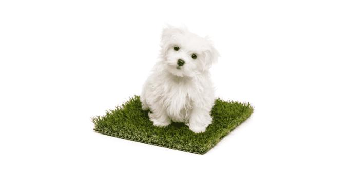 Comment apprendre à son chien à faire ses besoins au même endroit