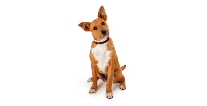Pourquoi mon chien n'écoute pas dehors ? 3 Causes