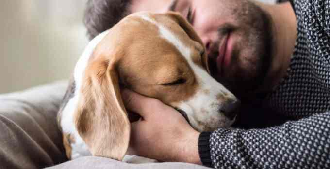 Pourquoi dresser votre chien vous rend-il meilleur?