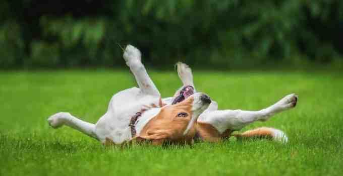Comment apprendre à son chien à rouler bouler !