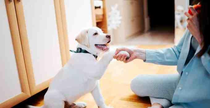 Donne la patte bon chien !