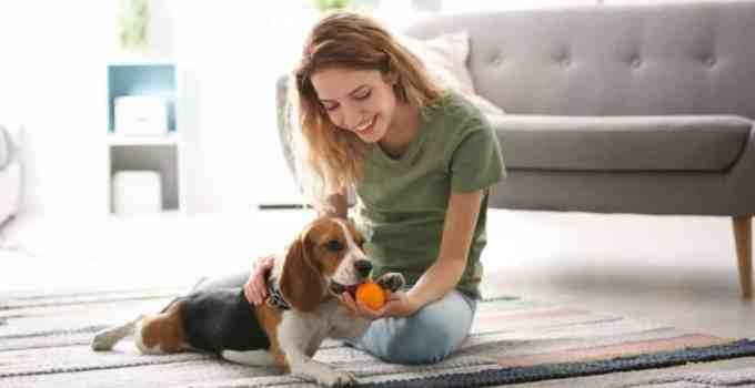 Apprendre à donner à son chien avec n'importe quels objets !