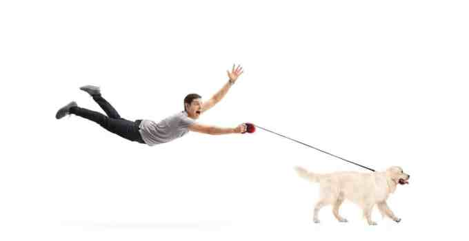 Comment calmer son chien en promenade 3 conseils pour bien le vivre
