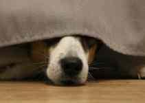 Mon chien se met dans un coin se cache peur irrationnelle