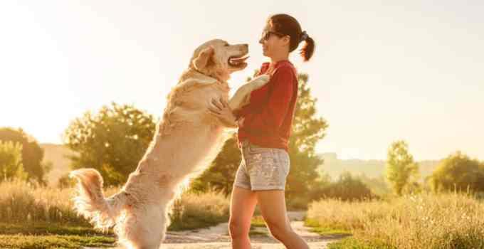 Comment dresser un chien qui saute sur les gens voici 5 astuces