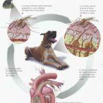 The Pet's Doctor/ La filariosi cardiopolmonare nel cane
