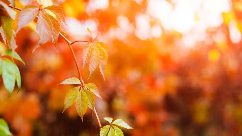 NEWS / Equinozio d'autunno 2020, perché quest'anno cade il 22 settembre?