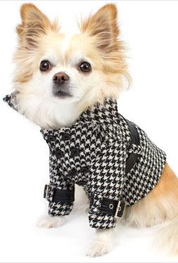 Designer Dog Coats, and A Stroll Through New York City