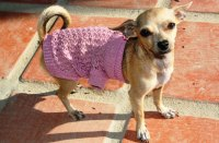 Where To Find Teacup Chihuahua Clothes Cheap