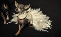 Couture Dog Clothes: Standing Out From The Ordinary ...