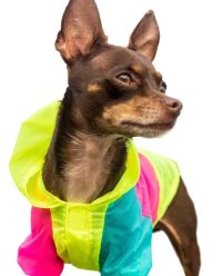 Neon Dog Jacket - Teacup, XXS, XS and Small Dog Clothes