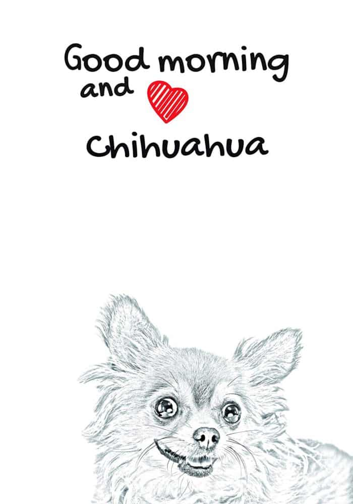 Chihuahua long haired Notebook with the calendar of eco