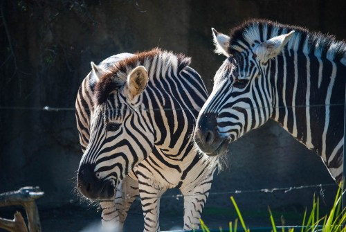 Link – Tokyo Zoo Offers Itself up as Refuge for Anyone Suffering From Depression or Anxiety – Geek.com