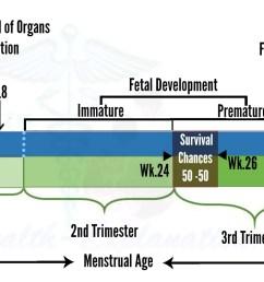fetal development and viability [ 1550 x 766 Pixel ]