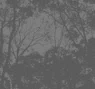 grayS100_2875-t-1