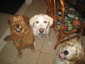 Max, Sora & Gracie, continue to train to assist with this Center's SLP services!