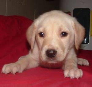 Sora, adoption picture, 2006