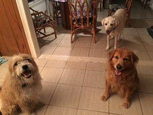 Gracie, Sora & Max (L to R) during Hurricane Hermine 2016 Photo: LSG