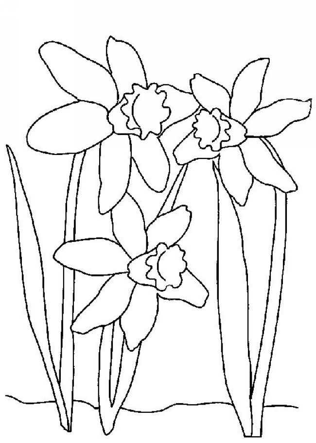 Daffodil Field Coloring Page Coloring Pages