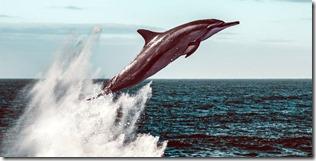 delfines-mar-alboran_47ef8877_1280x644