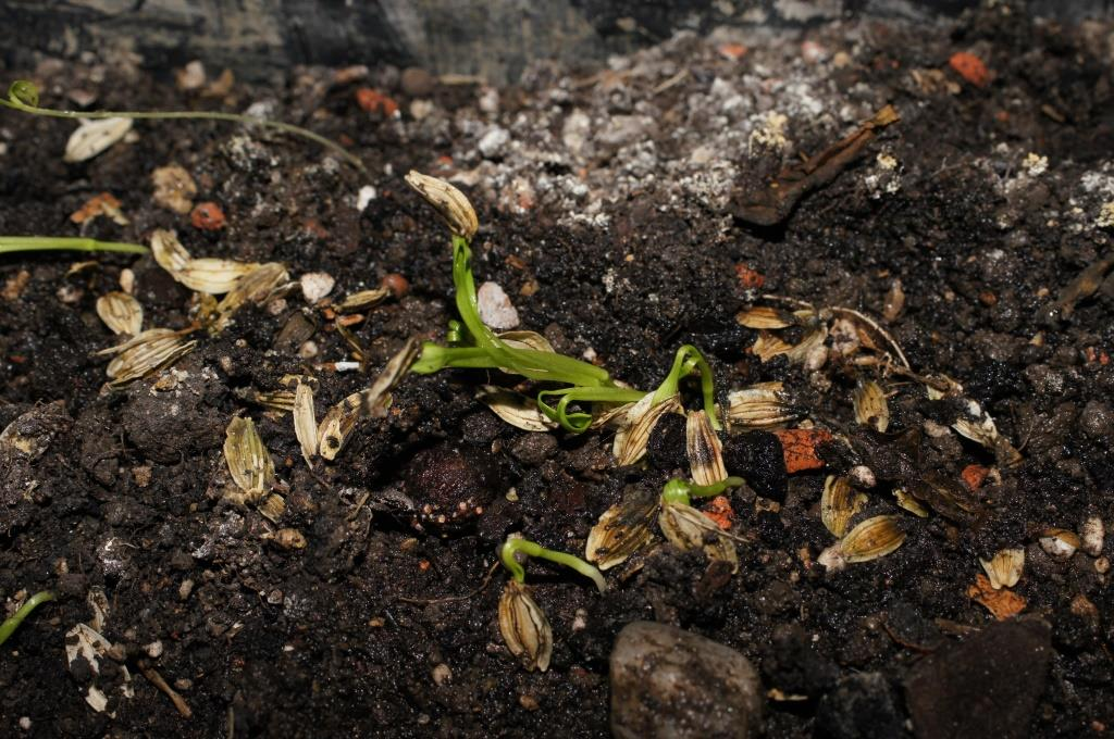 'Power' Plants: A Sprouting Thought