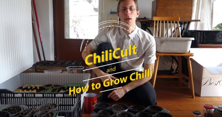 How to Grow Chilli