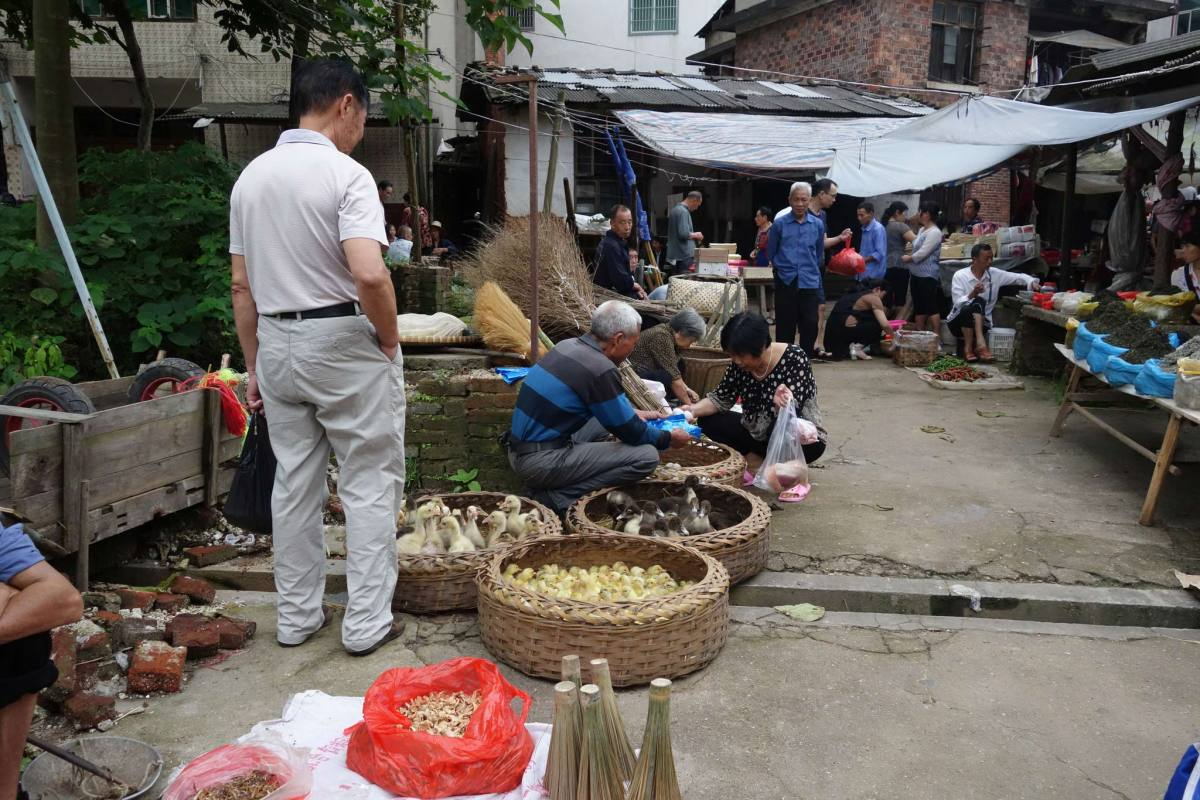 Fowl at local farmers market in rural Hunan, China