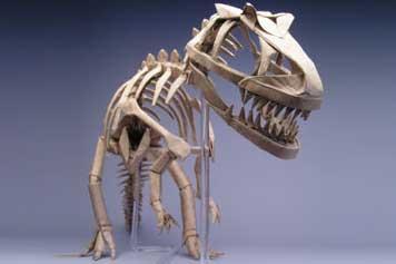 O Esqueleto de um Dinossauro, estilo o que vemos em museus.